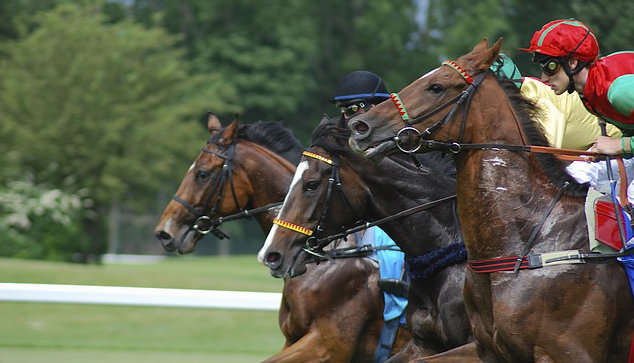 Can you bet on horse racing in dubai msw betting pba 2021